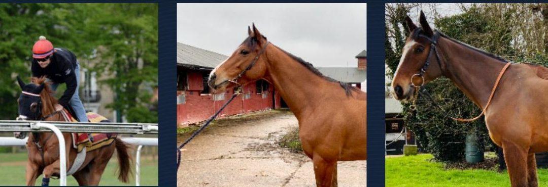 Friends of Ebony Horse Club Syndicate